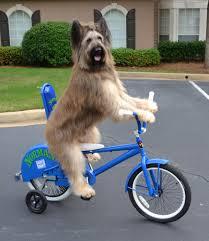 Norman Dog