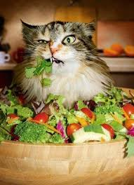 veggy cat