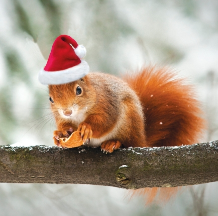 Christmas-Squirrel